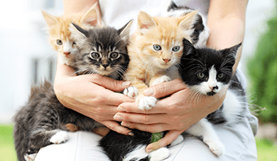 Woman holding a group of kittens: Pet Wellness Care in Orlando