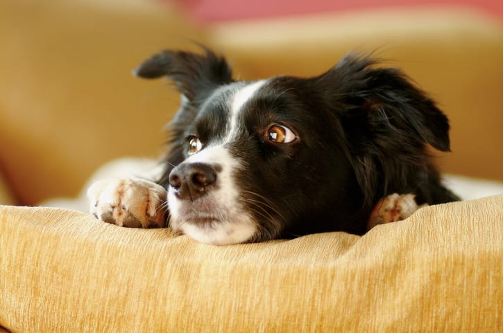 Ways pet owners are causing their dogs stress
